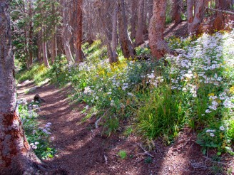 Asters line our path
