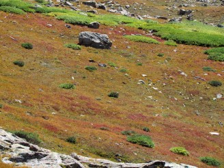 Alpine tundra starting to turn