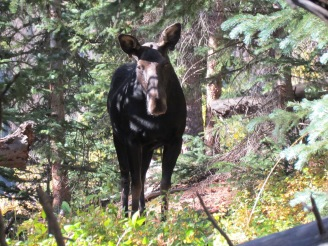 We were thrilled to see this moose