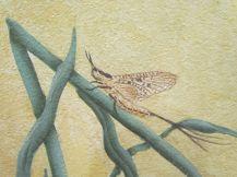 Insect (? mayfly)/Insekt (? Eintagsfliege)