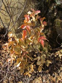 Last year's still colorful vegetation/Bunte Überbleibsel vom vergangenen Jahr