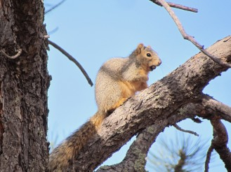 Squirrel, always here and always hungry/Eichhörnchen, immer hier und immer hungrig