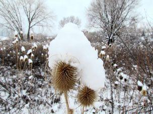 Snow bonnet/Schneehäubchen