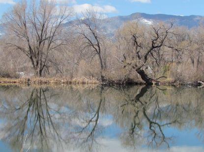Most trees are still leafless/Die meisten Bäume sind noch blätterlos