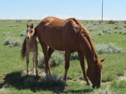 Mare with foal/Stute mit Fohlen
